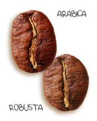 Café grains arabica et robusta